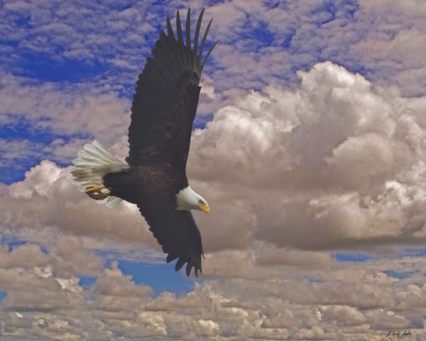 Master Of Flight-Signed-